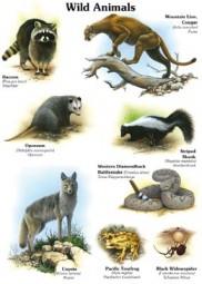 Wild animals I