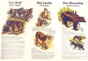 Der Wolf, der Luchs, der Braunbär