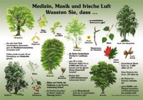 Medizin, Musik und frische Luft - Wussten Sie, dass...