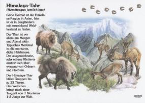 Himalaya-Thar
