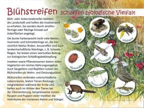 Blühstreifen schaffen biologische Vielfalt