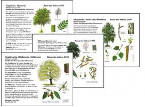 31 Bäume des Jahres 1989-2019 - Paket