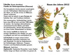 Lärche - Baum des Jahres 2012
