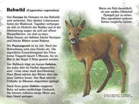 Rehwild