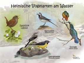 Heimische Vogelarten am Wasser