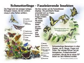 Schmetterlinge - Faszinierende Insekten