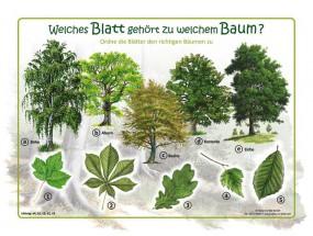 Welches Blatt gehört zu welchem Baum?
