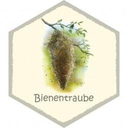 Wabe Bienentraube