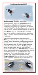 Insekt des Jahres 2005 - Steinhummel