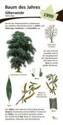 Silberweide - Baum des Jahres 1999