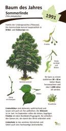Sommerlinde - Baum des Jahres 1991