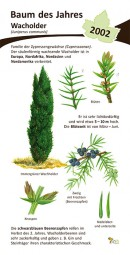 Wacholder - Baum des Jahres 2002