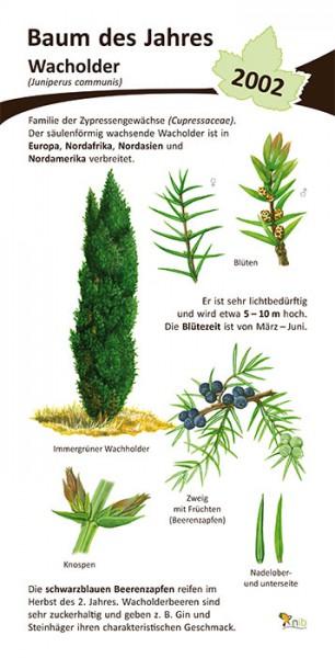 wacholder baum des jahres 2002 15x30 cm pflanzen. Black Bedroom Furniture Sets. Home Design Ideas