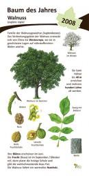 Walnuss - Baum des Jahres 2008
