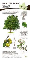 Wildapfel - Baum des Jahres 2013
