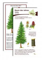 Fichte - Baum des Jahres 2017