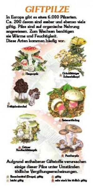 giftpilze 6 arten 15x30 cm pilze lehrtafeln natur im bild lehrtafeln f r natur lehr. Black Bedroom Furniture Sets. Home Design Ideas
