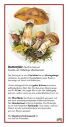 Butterpilz