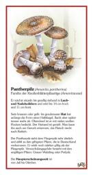 Pantherpilz