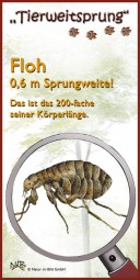 Tierweitsprung Floh