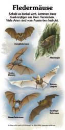 Fledermäuse (6 Arten)