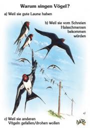 Warum singen Vögel?
