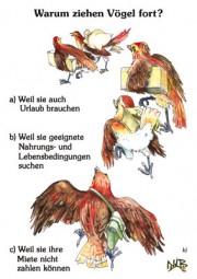 Warum ziehen Vögel fort?