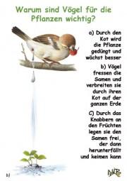 Warum sind Vögel für Pflanzen wichtig?