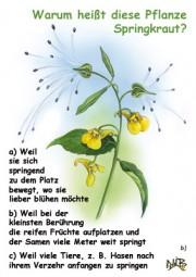 Warum heißt diese Pflanze Springkraut?