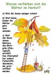 Warum verfärben sich im Herbst die Blätter?