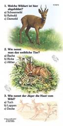 Rehwild - Quiz