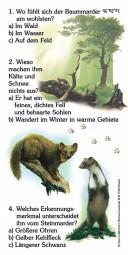 Baum- und Steinmarder - Quiz