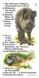 Wildschwein - Quiz