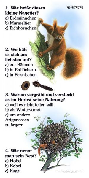 Eichhörnchen Nahrung Arbeitsblatt : Eichhörnchen quiz natur im bild lehrtafeln für