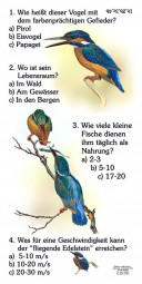 Eisvogel - Quiz