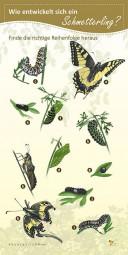 Wie entwickelt sich ein Schmetterling?