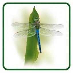 Königs-Libelle