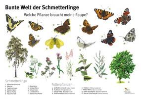 Bunte Welt der Schmetterlinge - Welche Pflanze braucht meine Raupe?