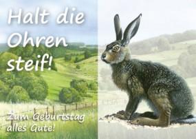 Geburtstagskarte Hase