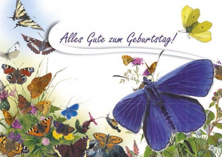 Geburtstagskarte Schmetterling Postkarten Naturbucher Und Mehr