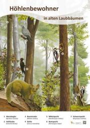 Höhlenbewohner in alten Laubbäumen