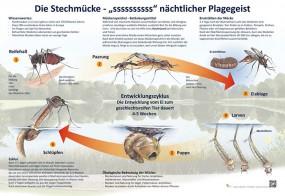 Die Stechmücke