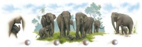 Elefantenmütter