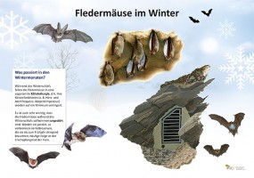 Fledermäuse im Winter