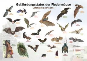 Gefährdungsstatus der Fledermaus