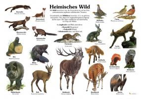 Heimisches Wild