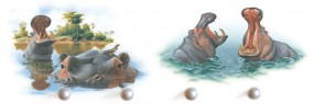 Flusspferde schwimmend