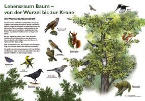 Lebensraum Baum - Wipfelzone