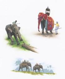 Der Mensch und der Elefant