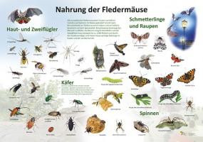 Nahrung der Fledermäuse